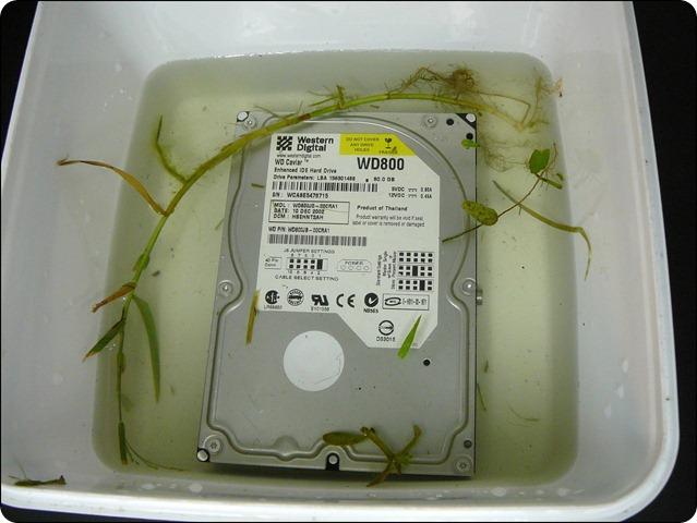 ổ cứng bị ngâm nước